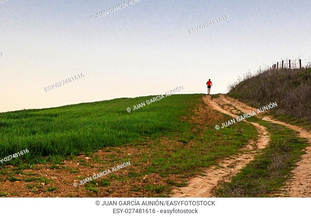 Man running uphill through green cereal field at sunset, Extremadura, Spain