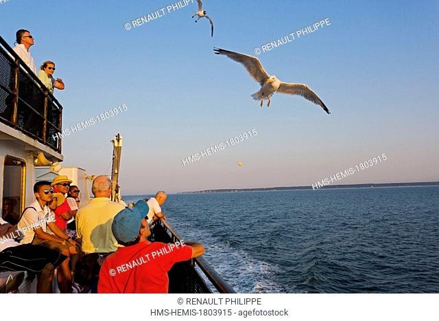 United States, Massachusetts, Cape Cod, Martha's Vineyard island, on the ferry to Woods Hole, the deck at sunset, seagulls