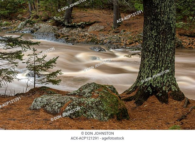Standing waves and rushing water in the Amnicon River with shoreline pine trees