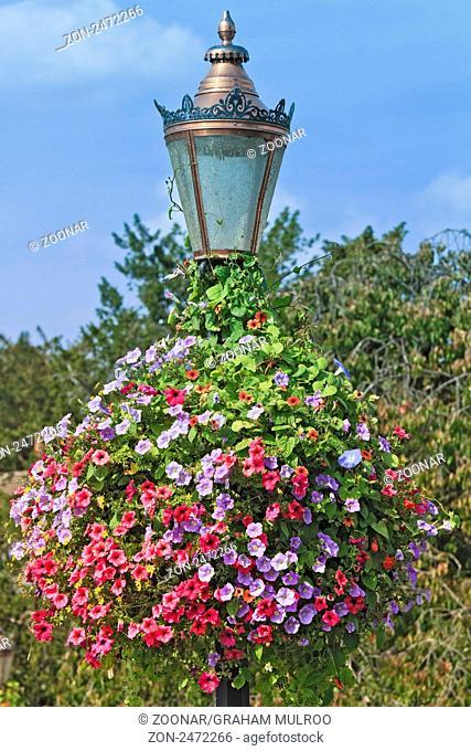 UK Wallingford Lampost In Bloom