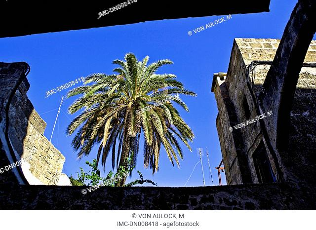 Greece, Rhodes, palm tree