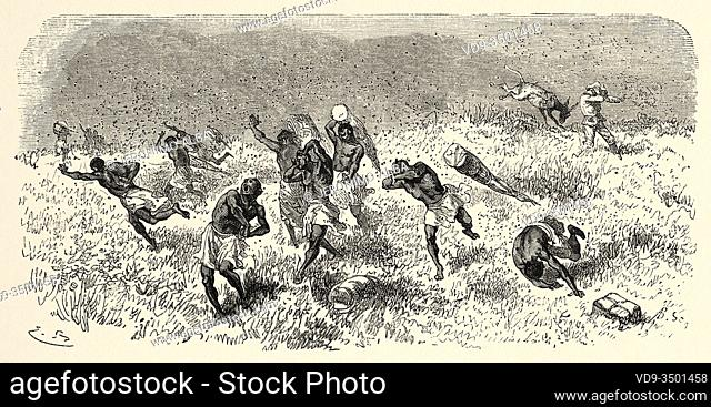 Bearers being attacked by bees, Tanzania, travel and exploration by Henry Morton Stanley, expedition how I found Livingstone in Central Africa 1871-1872