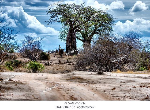 Savanna landscape, Tanzania, East Africa