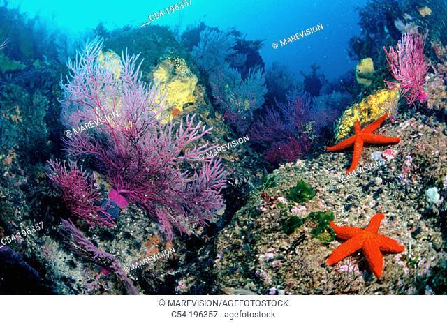 Sea floor. Galice. Spain