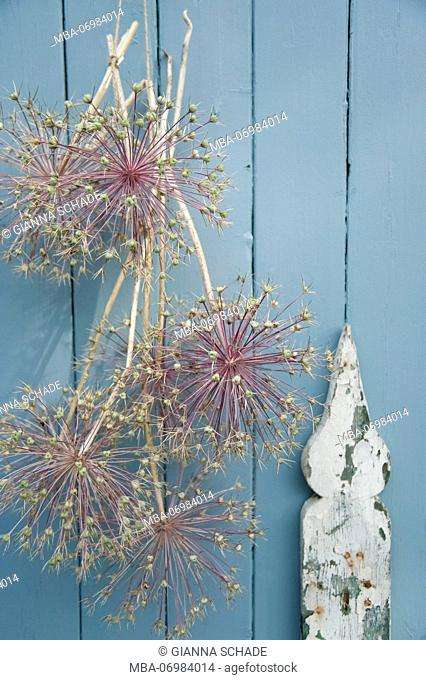 Allium flowers as a wall decoration