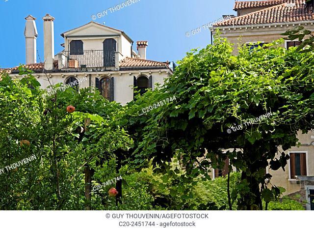Pomegranates trees, Garden, Palazzo Soranzo Capello, Venice, Venetia, Italy
