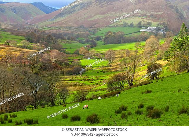 View from Derwent Fells towards Robinson and Ard Crags, Lake District National Park, Little Town, Cumbria, England, Europe