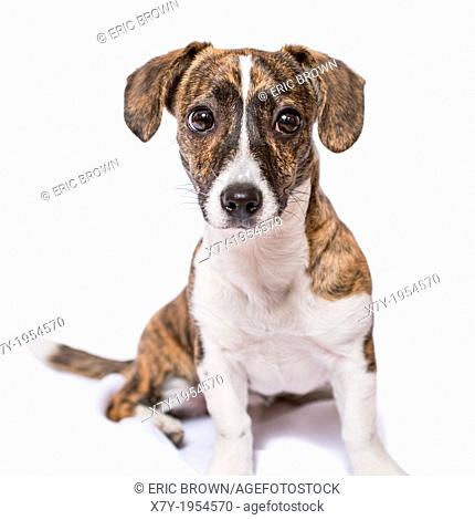 A puppy in a studio setting