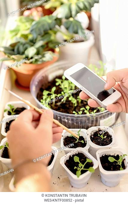 Young man using cell phone at plants at the window