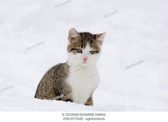 Katze sitzend im Schnee, Cat in snow