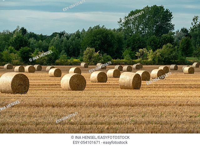 Cheerful autumn scene with round bales of straw on a mown grain field in bright sunshine with impressive clouds in the skye