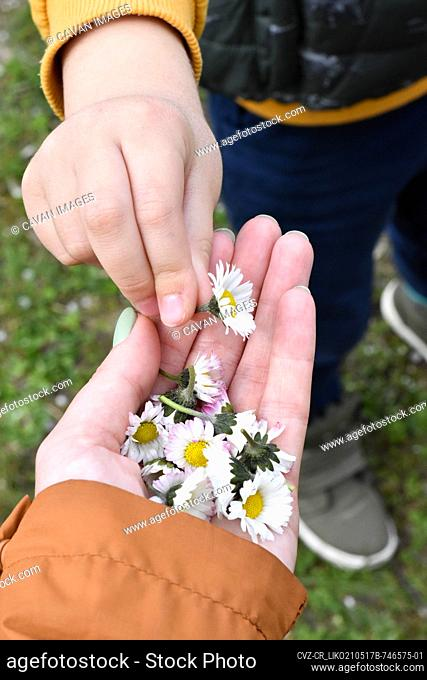 The son picked flowers for his mother