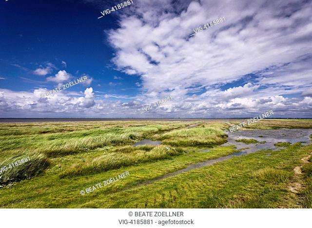 salt marshes - Hamburger Hallig, Schleswig-Holstein, Germany, 23/06/2013