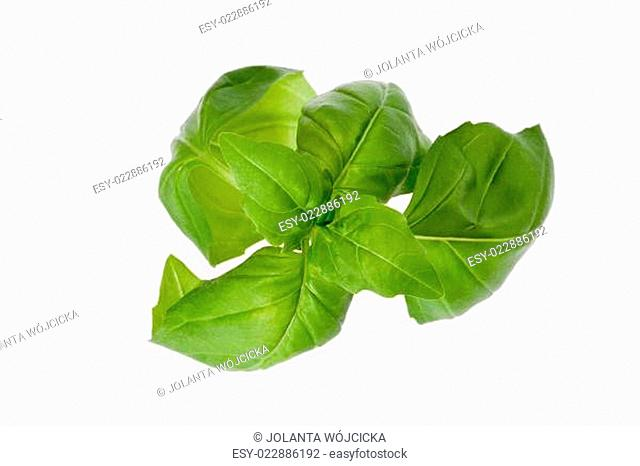 some leaves of basil isolated on white background