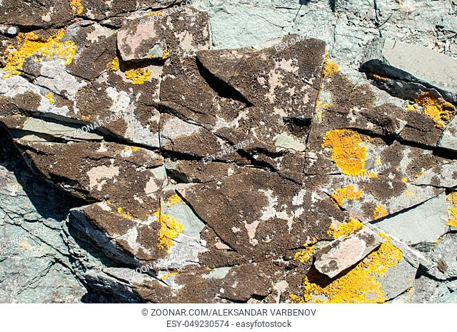 Surface of sea rock covered with colorlful yellow lichens closeup as natural background