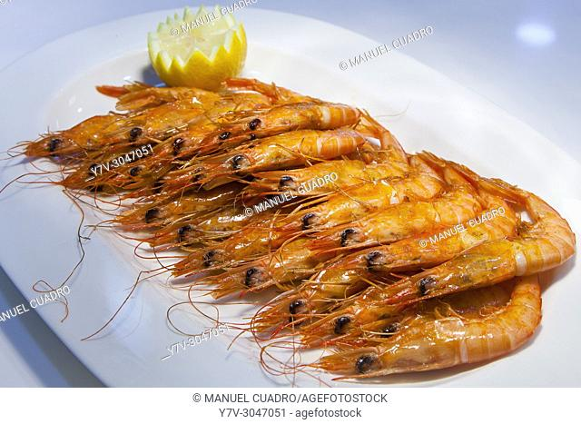 Plato de Gambas de Huelva a la plancha / Grilled Huelva Shrimps. Basque Country, Spain