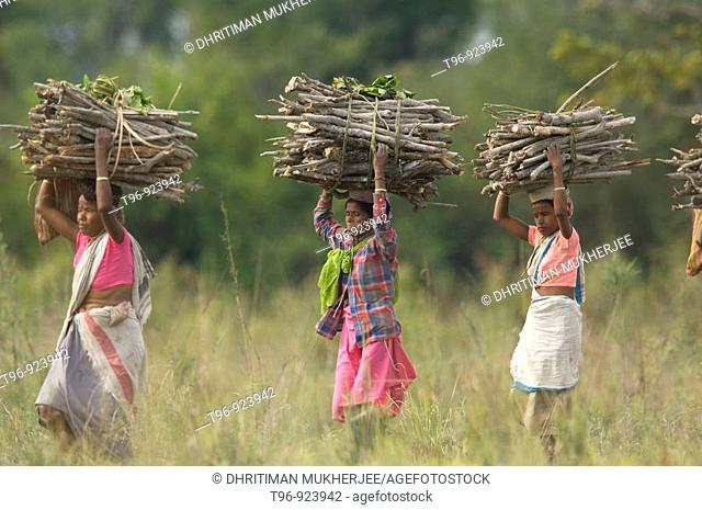 Tribal women carrying wood bundle out of the jungle