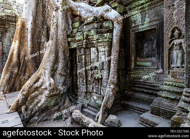 Ta Prohm Temple, The Angkor Wat Temple Complex, Siem Reap, Cambodia
