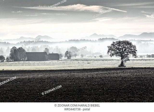 Morgennebel im Voralpenland, Bayern