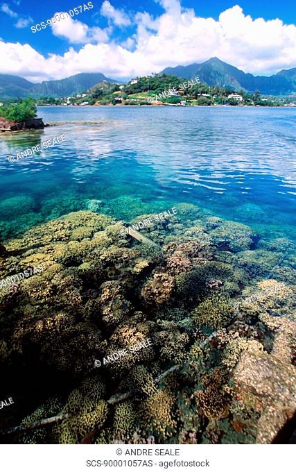 Hard coral and Koolau mountains, Hawaii Institute of Marine Biology, Coconut I , Oahu, Hawaii N Pacific