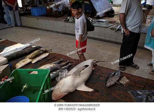 Little boy looking at fish for sale in the fish market of Muttrah, Oman, Middle East