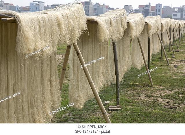 Drying vermicelli noodles (Hanoi, Vietnam)