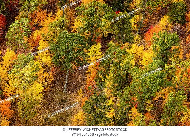 Aerial view of brilliant fall color on the Huron-Manistee National Forest in Michigan, USA