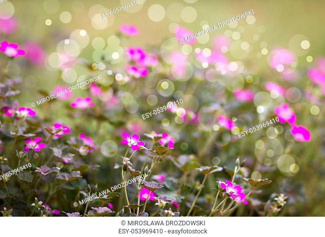 Lovely abstract background with tiny pink flowers. Soft focus photo