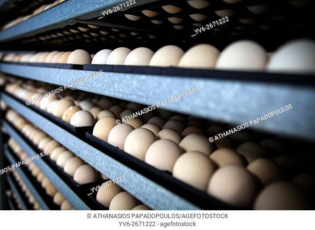 eggs and chicks, Greece