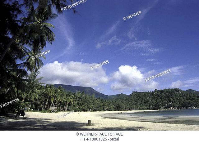 Palms on the beach, Thailand