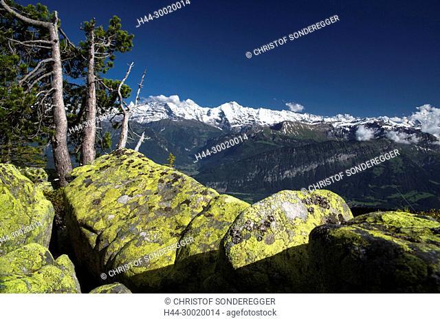 Aussicht vom Niederhorn zu den Berner Alpen