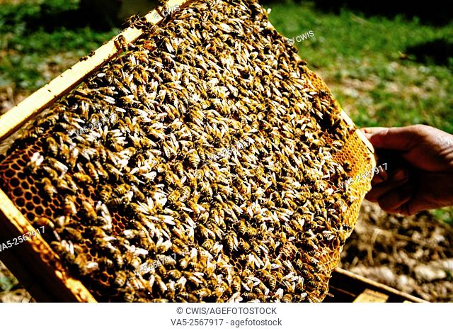 Taiyuan, Shanxi province, China - The view of many bees in bee hive