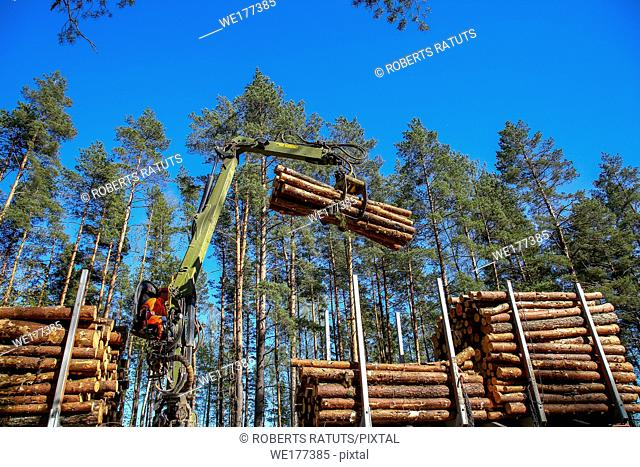 Crane in forest loading logs in the truck. Crane operator loading logs on to truck on a nice spring day. Timber harvesting and transportation in forest