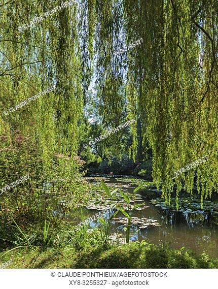 Weeping willows, Giverny Gardens; Normandy; France