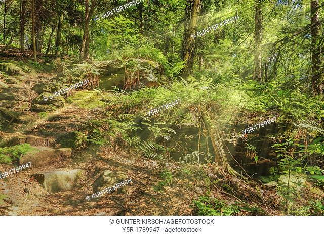 Forest path in summer, the sun shining through the trees, Rosenthal Bielatal National Park Saxon Switzerland, Saxony, Germany, Europe