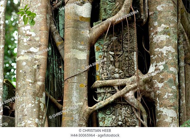 Asia, Southeast Asia, asian, Cambodia, cambodian, Siem Reap, UNESCO, World Heritage, Angkor, Beng Mealea