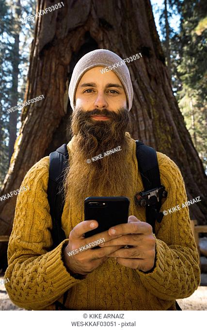 USA, California, Yosemite National Park, Mariposa, portrait of bearded man with cell phone at sequoia tree