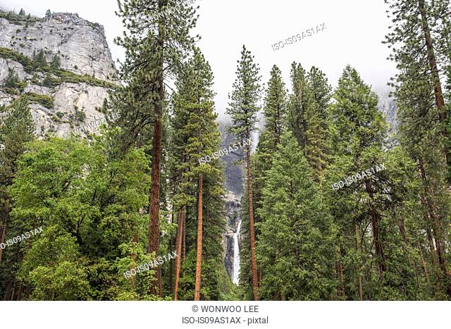 View of forest and waterfall, Yosemite National Park, California, USA