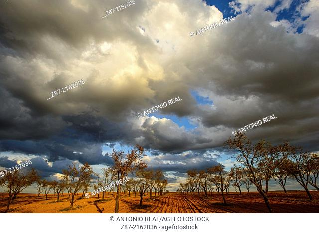 Almond trees field and clouds, Villar de Cañas, Cuenca province, Castilla-La Mancha, Spain