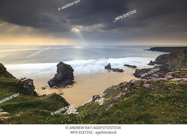 Spring flowers at the Bedruthan Steps on the North coast of Cornwall, captured on atmospheric evening in early May