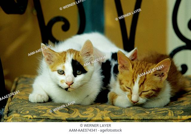 Two Kittens laying on Chair
