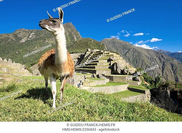 Peru, Cusco Province, Incas Sacred Valley, Inca archeological site of Machu Picchu, listed as World Heritage by UNESCO, built in the 15th century under the...