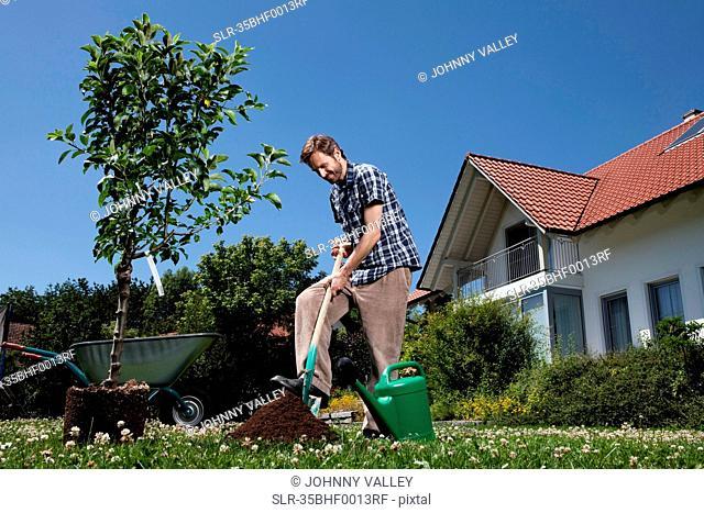 Man planting tree in backyard