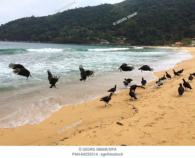 Vultures scramble to get the remains of a dead fish on the beach Proveta, a village on the Atlantic island of Ilha Grande, Brazil, 5 September 2016