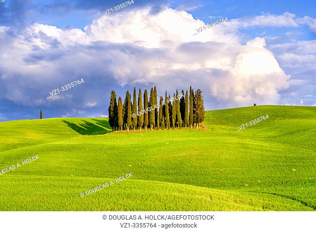 Cypress Grove at Sunset in Val d'Orcia Tuscany Italy World Location