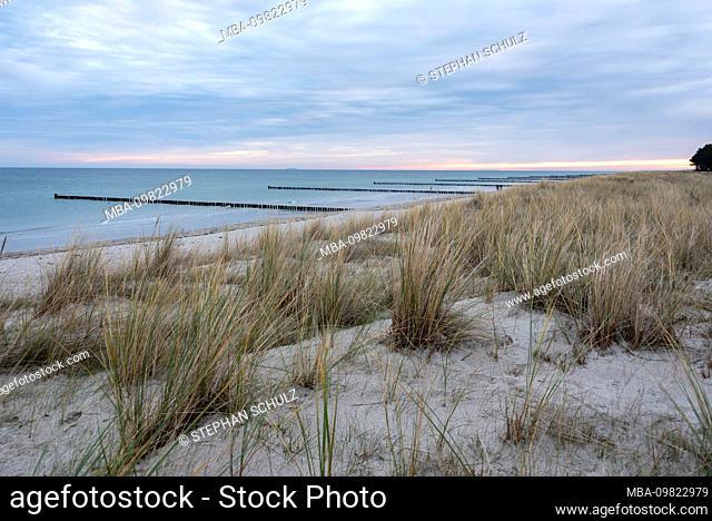 Germany, Mecklenburg-West Pomerania, Zingst, groynes, breakwater, dune, dune grass