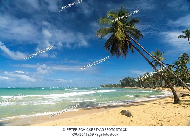 palm fringed beach in Las Terrenas, Samana peninsula, Dominican Republic, Carribean, America,