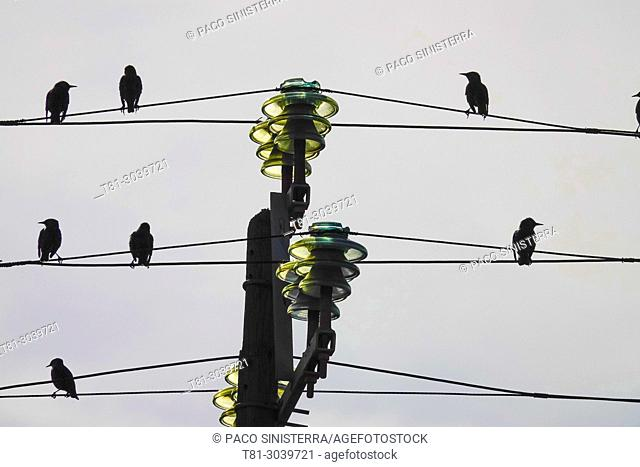 birds on electric cable, Sevilla, Spain