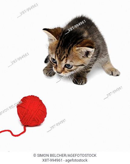 Kitten Playing with a Ball of Wool