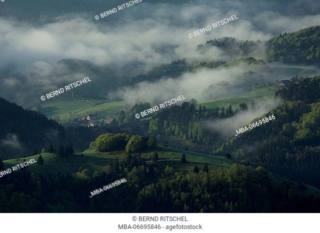 Morning mood at the Belchen, Black Forest, Baden-Wuerttemberg, Germany